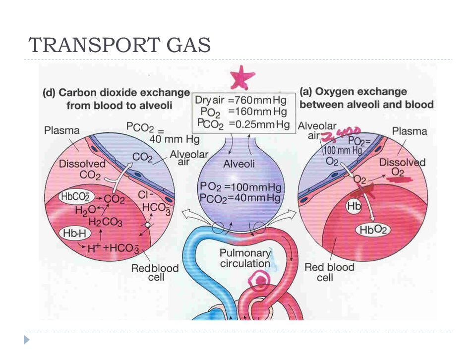 TRANSPORT GAS