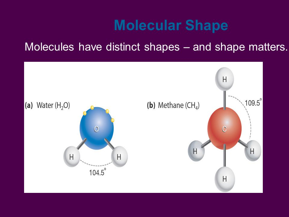 Molecular Shape Molecules have distinct shapes – and shape matters.