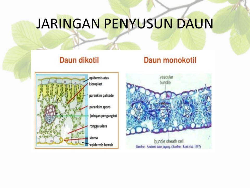 Struktur Anatomi Buah Dikotil Dan Monokotil