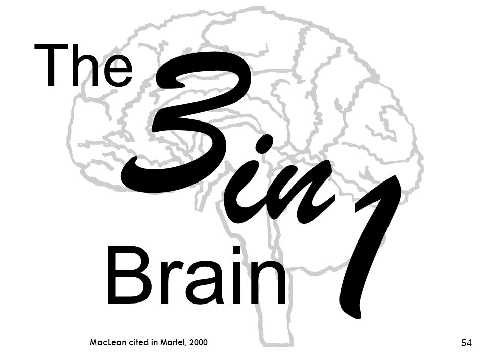 54 The 3 in 1 Brain MacLean cited in Martel, 2000
