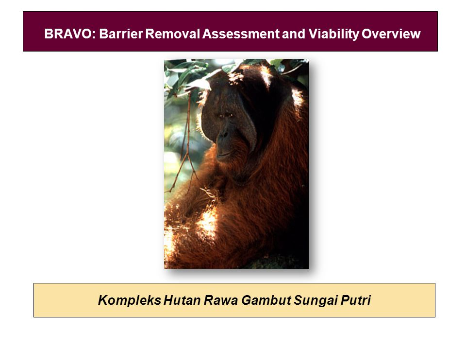 Kompleks Hutan Rawa Gambut Sungai Putri BRAVO: Barrier Removal Assessment and Viability Overview